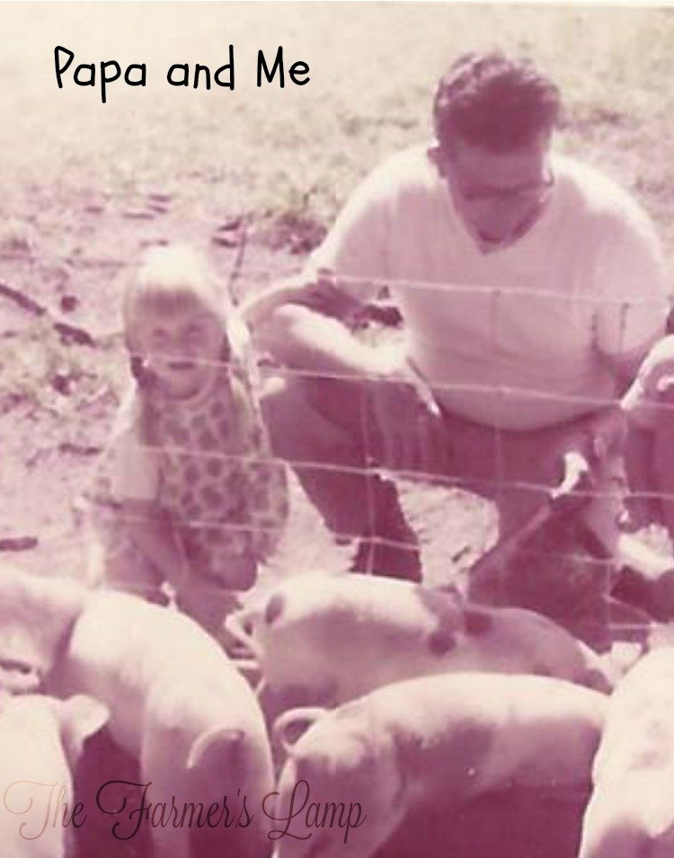 My Papa and me feeding his breeds of pigs