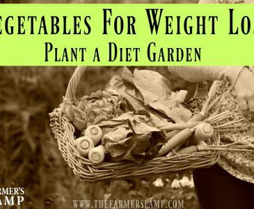 Vegetables for Weight Loss- plant a diet garden