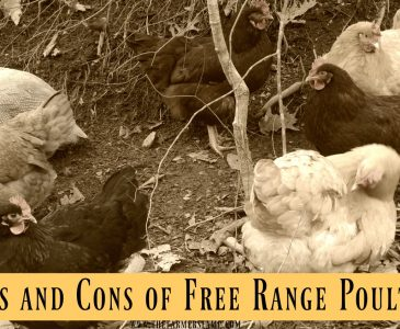 free- range-poultry-chickens-